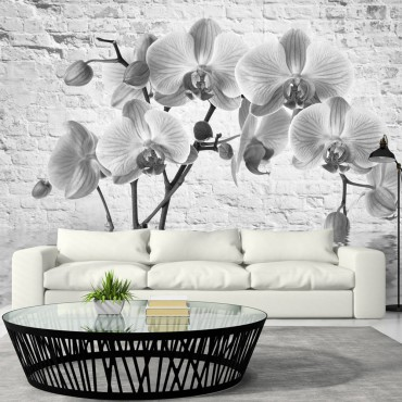 Fotomural - Orchid in...