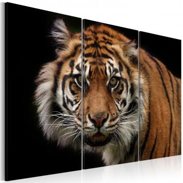 Cuadro - Tigre depredador
