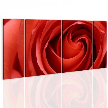 Cuadro - Passionate rose