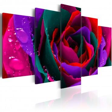 Cuadro - Multicoloured rose