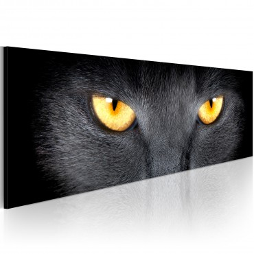 Cuadro - Look into my eyes...