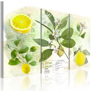 Cuadro - Fruta: limón