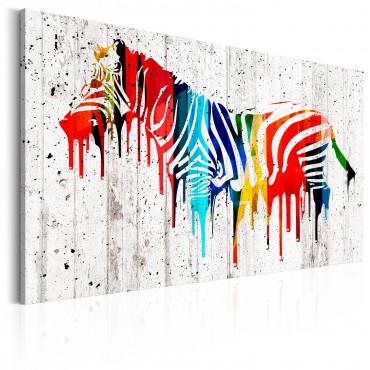 Cuadro - Colourful Zebra