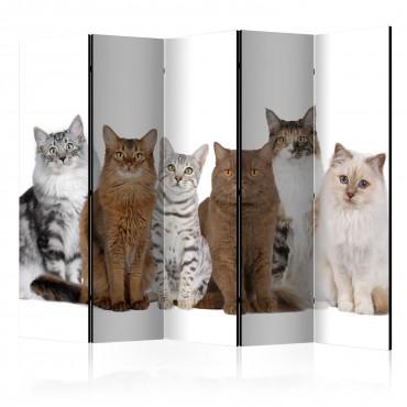 Biombo - Sweet Cats II...
