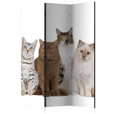 Biombo - Sweet Cats [Room...