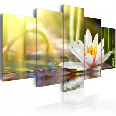 Cuadro - Sunny Lotus