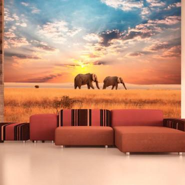 Fotomural - Elefantes...