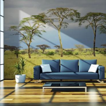Fotomural - Savanna trees