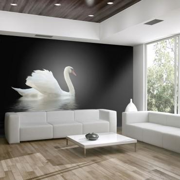 Fotomural - cisne (blanco y...