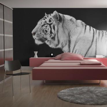 Fotomural - Un tigre blanco