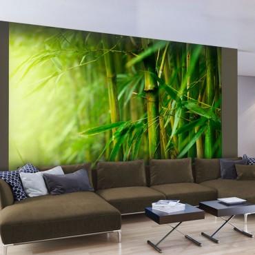 Fotomural - selva - bambú