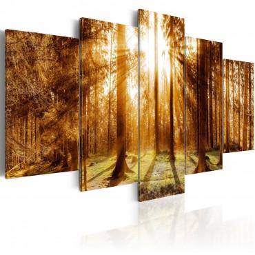 Cuadro - Forest Illumination