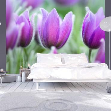 Fotomural - Tulipanes...