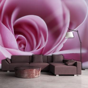 Fotomural - Una rosa de...