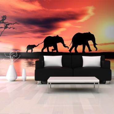 Fotomural XXL - elefantes:...