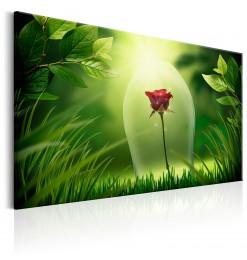 Cuadro - Magical Rose
