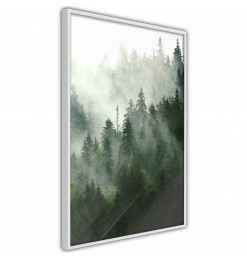 Póster - Steaming Forest