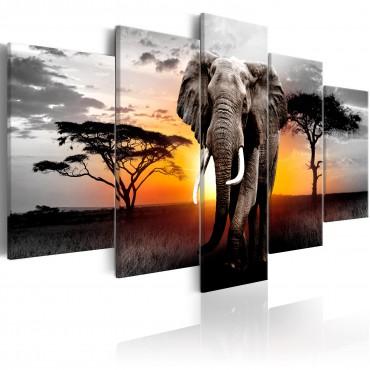 Cuadro - Elephant at Sunset