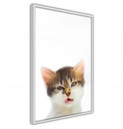Póster - Funny Kitten