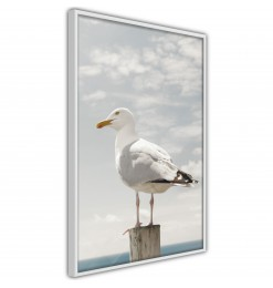 Póster - Curious Seagull