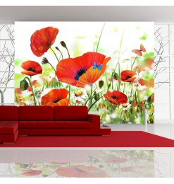 Fotomural - Country poppies