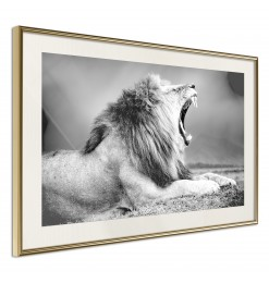 Póster - Yawning Lion