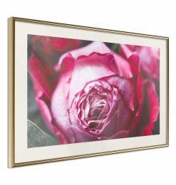 Póster - Blooming Rose
