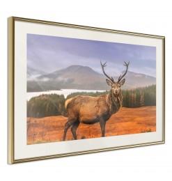 Póster - Majestic Deer