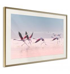 Póster - Flamingos Breaking...