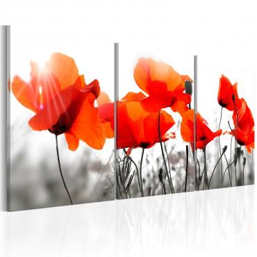 Cuadro - Charming Poppies